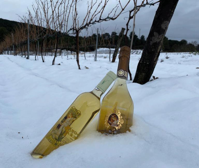 invierno viñedo cavas naveran