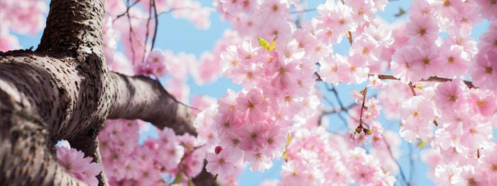 primaveranaveran